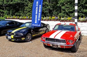 Mustangs at The Mulberry Inn